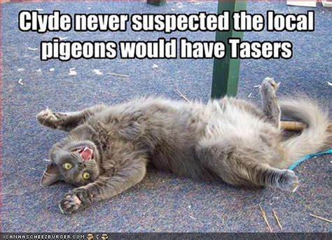 Funny Meme Animals - cute animal memes tumblr image memes at relatably com