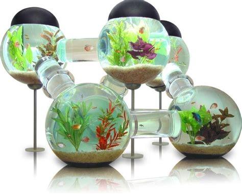 labyrinth aquarium le parfait petit paradis pour vos poissons