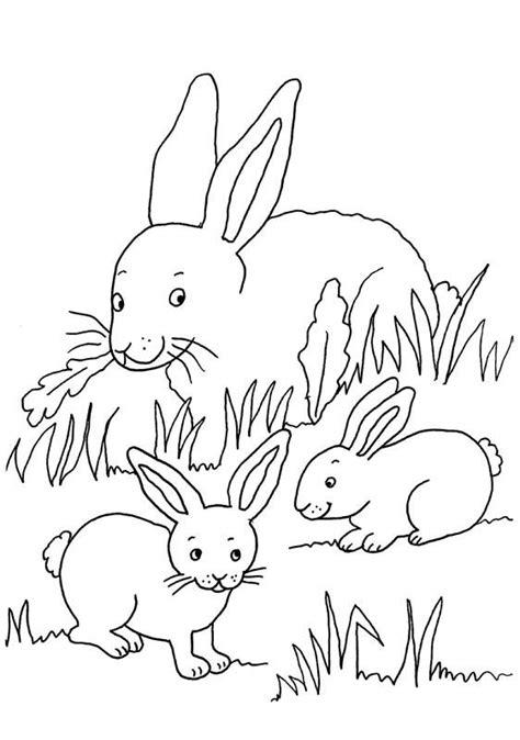 ausmalbild kaninchen kaninchenfamilie kostenlos ausdrucken