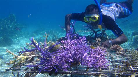 Rural coral farming project in Western Province, Solomon I ...