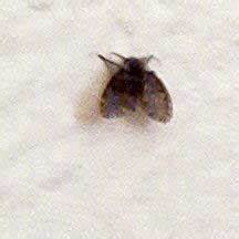 Bathroom fly what39s that bug for Tiny flies in my bathroom