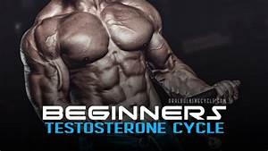 Testosterone Cycle  Best Steroid Cycle For Beginners
