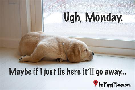 Monday Dog Meme - monday dog meme
