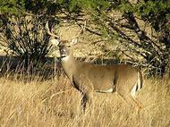 Wildlife Animal Kingdom