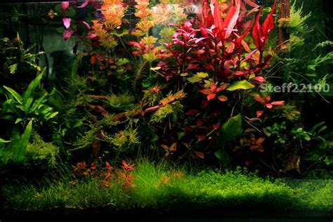 poissons aquarium eau douce clasf