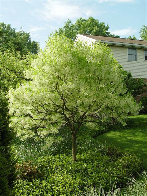 Gunshy About Trees?  Garden Housecalls