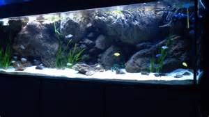Acquario malawi sfondo d
