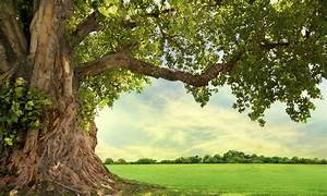 Premier Tree Solutions