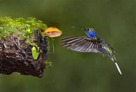 welcome to the hummingbird photography blog lowcountry