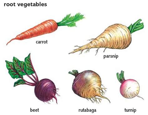 10 Best Root Vegetables Project Images On Pinterest Root