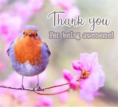 Thank Awesome Being Bird Card Everyone Suitable