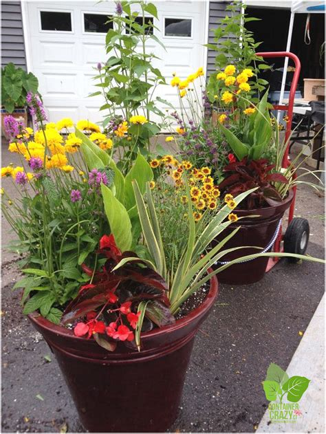 Powerful Perennials In Container Gardens  An Intro To May