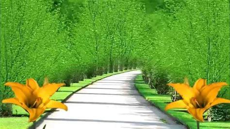 bg street view  yellow flowers  motion