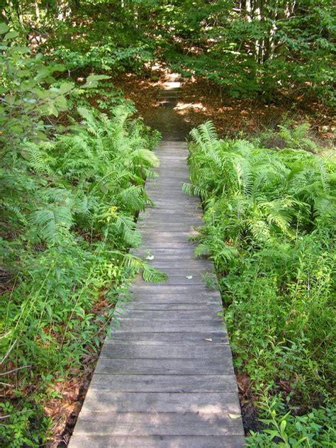 boardwalk at lake bluff sanctuary mi audubon bird