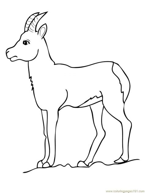printable goat coloring pages  kids