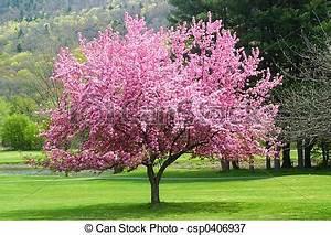 Rosa Blüten Baum : bilder von rosa bl hen baum pretty rosa bl hen baum in csp0406937 suche ~ Yasmunasinghe.com Haus und Dekorationen