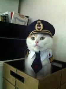 captain cat sailor daily picks and flicks
