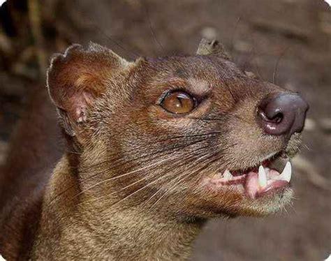 World's Weird Animals Photos