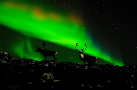 northern lights tours canada 5 off canada wildlife holidays grizzly bears wildlifetrails