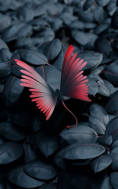 Butterfly Leaves Wings Contrast Wallpapers Phone Iphone