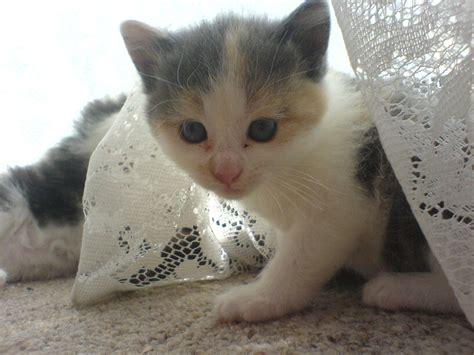 Cute Kitty By Miss-boom-boom On Deviantart