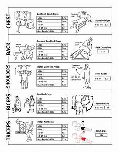 Upper Body Diagram  U2014 Untpikapps