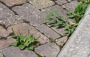 Se Débarrasser Des Guepes Maçonnes : se d barrasser des mauvaises herbes guide astuces ~ Carolinahurricanesstore.com Idées de Décoration
