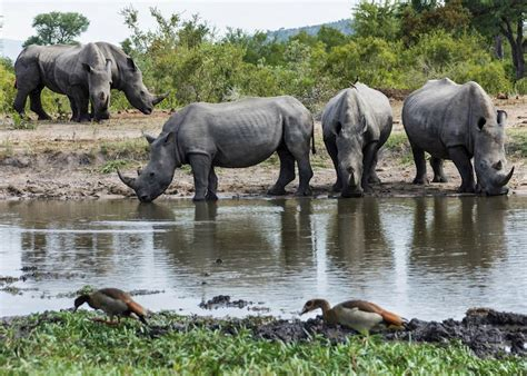 cape town  kruger luxury south african rail journey