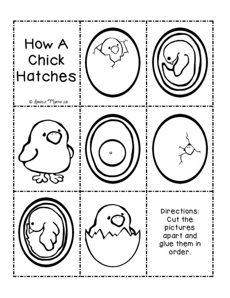 chicken cycle activities kindergarten cycling and