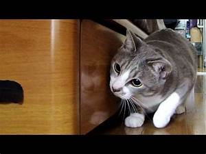 Confused Kitten watching a video of himself - Cats Video