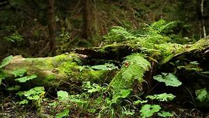 Close Up Pan Of Ferns And Undergrowth Stock Footage Video