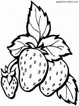 Strawberry Coloring Pages Fruit Printable Plant Strawberries Template Drawing Fresh Templates Sherriallen Getdrawings sketch template