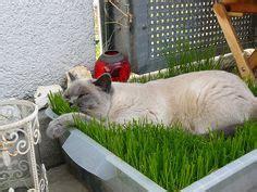 cat 39 s nine lives on black cats white cats and - Rasen Auf Balkon