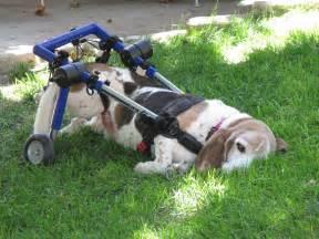 Used Dog Wheelchairs
