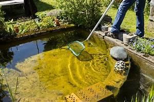 Algen Im Teich Entfernen : algen im teich diese tipps helfen ~ Orissabook.com Haus und Dekorationen
