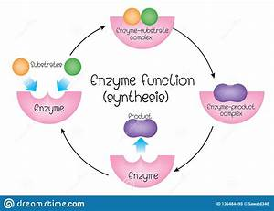 Enzyme Function Synthesis Stock Vector  Illustration Of