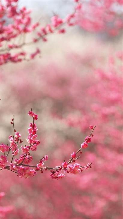 Wallpapers Iphone Girly Backgrounds Background Pink Nature