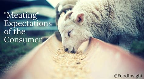 meat ing consumer expectations  ethical animal welfare