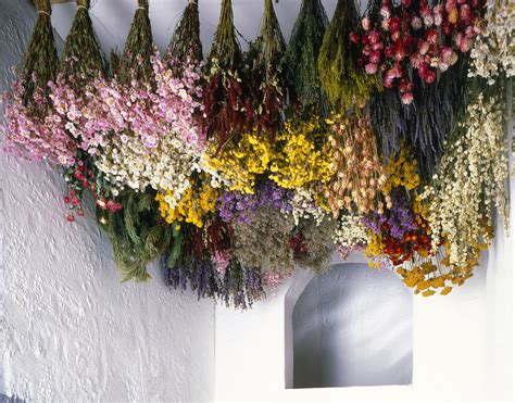 Dry Flowers Decoration For Home: Tips For Harvesting, Drying And Storing Flowers