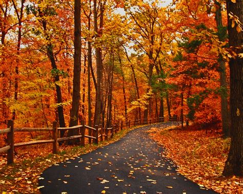 cool funny pictures wonderful autumn road wallpapers