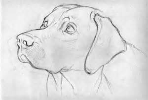 Dog Head Outline Drawing