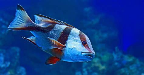 didnt   fish
