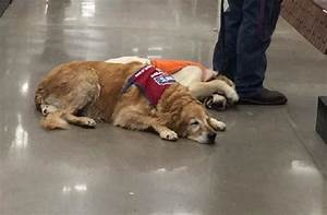 texas lowes hires disabled vet his service dog With lowes hires service dog