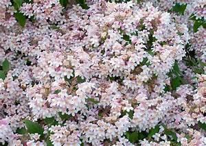 Blumen Für Schatten : geh lze f r schatten inklusive bl tengeh lze ~ Lizthompson.info Haus und Dekorationen