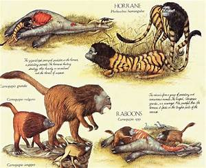 The horrors of evolution: the 10 freakiest animals of ...