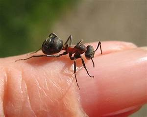 Wie Bekämpfe Ich Ameisen : umzugsaktion wie eine grundschule von 20 millionen ~ Whattoseeinmadrid.com Haus und Dekorationen