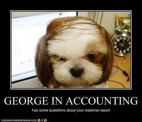 Accountant Dog Meme - 394 best accounting humour images on pinterest accountant humor jokes and cpa exam