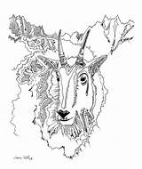 Goat Drawing Mountain Artwork Drawings Illustration Coloring Wild Getdrawings Goats Nature Wildlife Mt sketch template