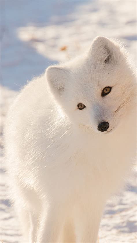 Free Winter Animal Wallpaper - winter animal wallpaper 48 images