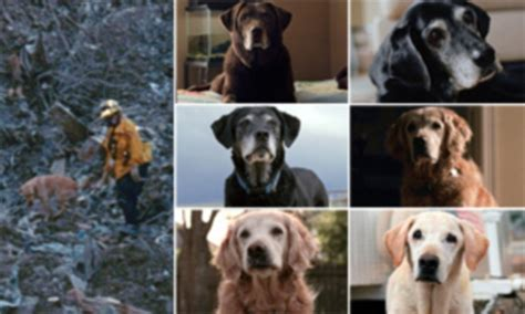 surviving  rescue dogs  scoured ground